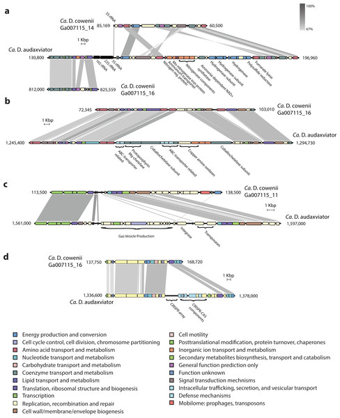 "Comparative analysis of genomic organization in ""Ca. Desulfopertinax cowenii"" and ""Ca. Desulforudis audaxviator."""