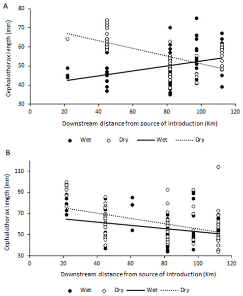Relationship between size (cephalothorax length, in mm) and distance to crayfish introduction source for C. quadricarinatus in the Komati River during the wet and dry seasons.