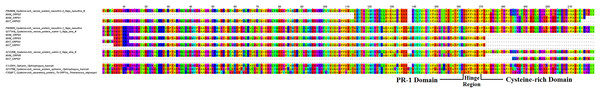 Multiple sequence alignment of cysteine-rich secretory protein (CRISP) transcripts from the venom gland transcriptomes of NK-M and NK-T in comparison to CRISP sequences of other venomous snake.