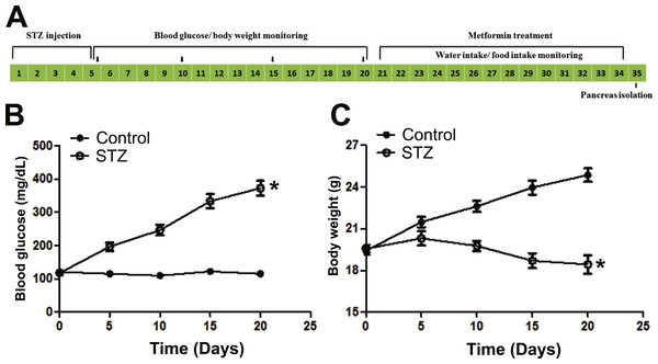 Illustration of experimental design and establishment of STZ induced diabetic mice model.