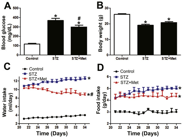 Effects of metformin treatment in STZ-induced diabetic mice on blood glucose, body weight, and feeding behavior.