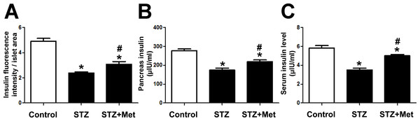 Effects of metformin treatment in STZ-induced diabetic mice on insulin production.