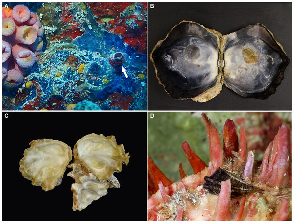 Non-native and potentially non-native invertebrate species observed and collected on the wrecks off the Florida Keys.