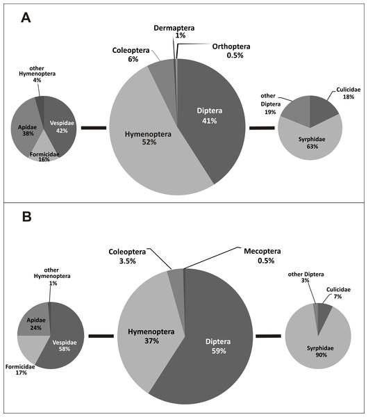 Taxonomic diversity of E. helleborine pollinators in anthropogenic (A) and natural (B) habitats.