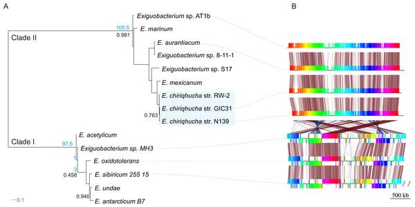 Evolutionary history of the genus Exiguobacterium.