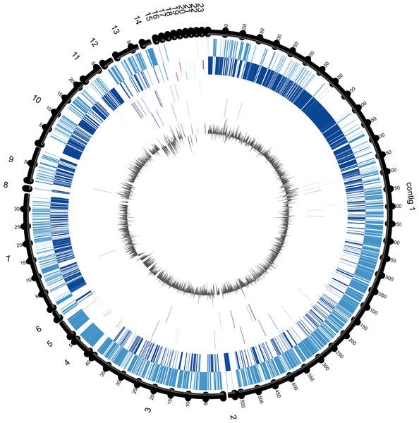 Circular genome map of E. chiriqhucha str. N139.