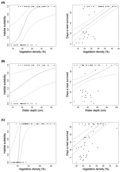Graphical representation (solid line: predicted values; dashed line: 95% confidence intervals) of adaptive habitat preferences in relation to nest survival in rallids.