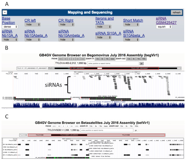 siRNA mapping.