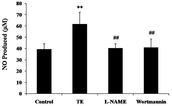 Effects of PI3K/Akt/eNOS inhibitors on TE-induced NO production.
