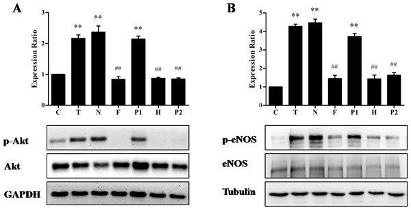 Effects of Ca2+ signaling on TE-induced Akt/eNOS activation.