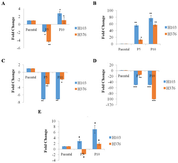In-Vitro mRNA expression of pluripotent genes in reprogrammed H103 and H376 relative to parental (n-3).