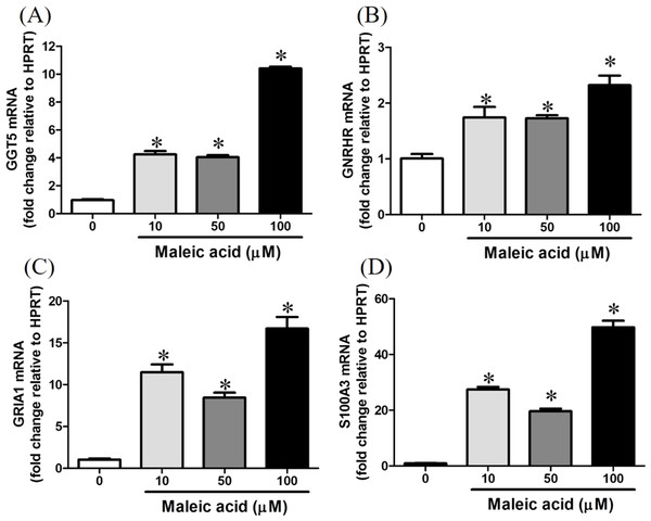 Increasing of GGT5, GNRHR, GRIA1, and S100A3 gene expression by maleic acid.