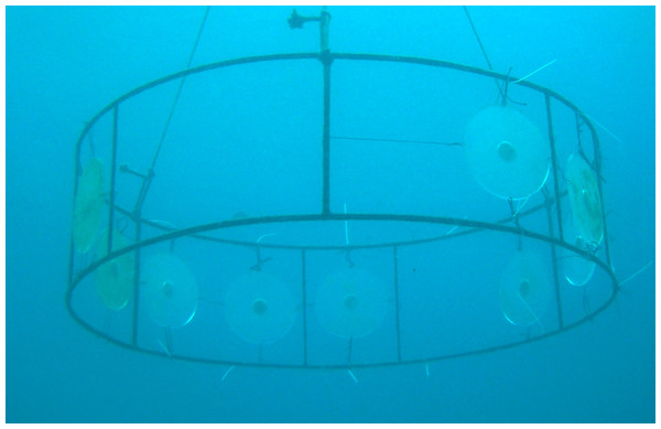 Acrylic disks on anchored structures at the IEAPM field laboratory.