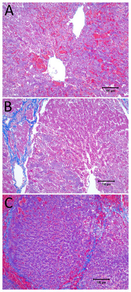 10× magnification of the pathological slides shown in Fig. 6.