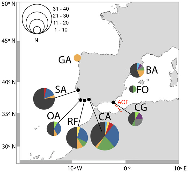 Distribution of D-loop haplotypes of Salaria pavo on each location.