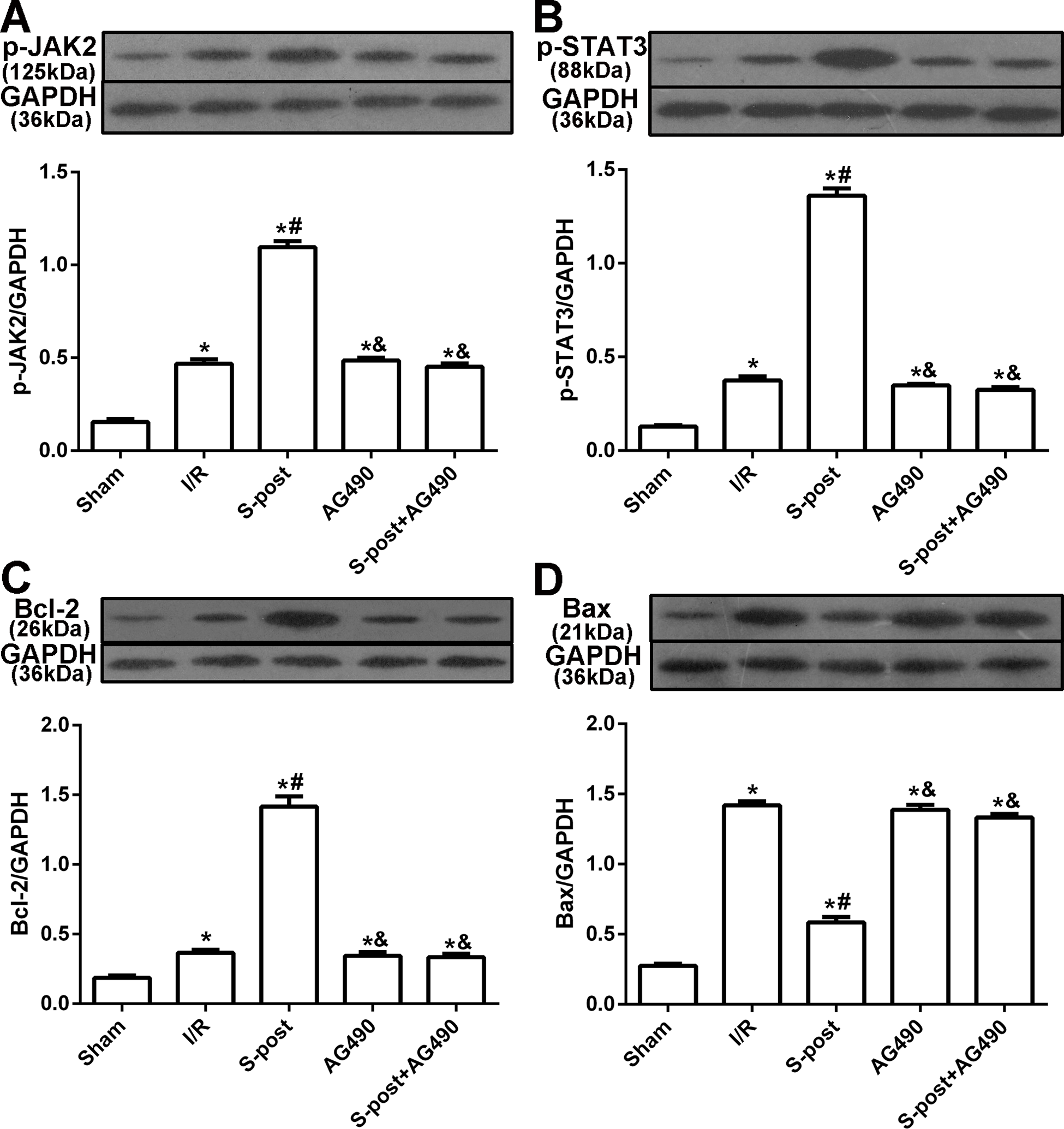 sevoflurane postconditioning protects the myocardium againstdoi 10 7717 peerj 3196 fig 4