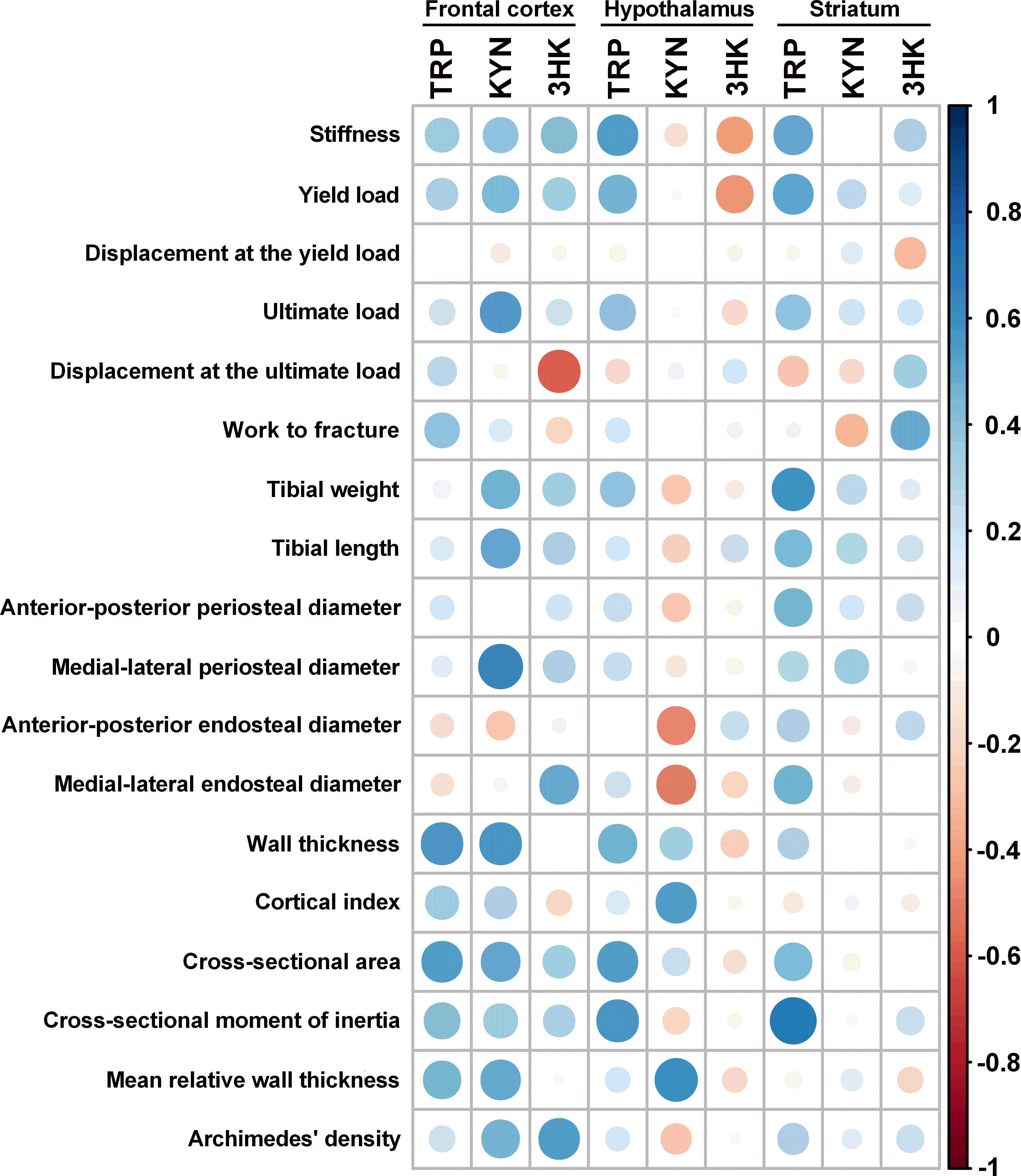 A link between central kynurenine metabolism and bone