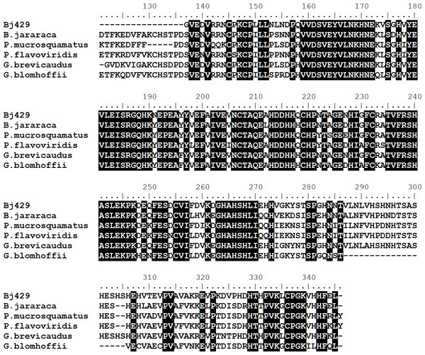 Multiple alignments of amino acid sequences of Bj46a-like (Bj429) with similar sequences described in different species of snakes.
