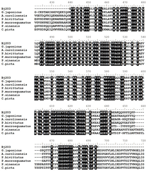 Multiple alignments of amino acid sequences of inter-alpha-trypsin inhibitor (Bj203) with similar sequences described in different species of reptiles.