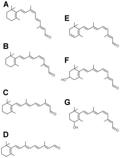 Retinaldehyde chromophores used by opsins.