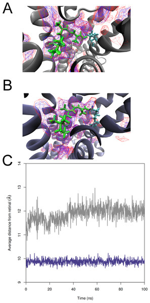 Demonstration of the changes in receptor binding pockets of T. pacificus and S. punctatus structures during MD simulations.