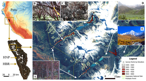 Study sites and vegetation communities located along an elevational gradient on Huascaran Biosphere Reserve (HBR) and Huascaran National Park (HNP)—Peru.