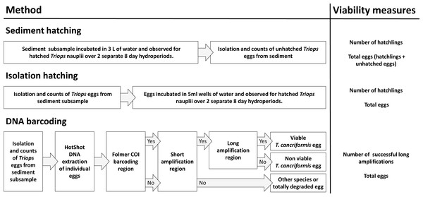 An overview of the three methods used in this study: sediment hatching, isolation hatching and DNA barcoding.