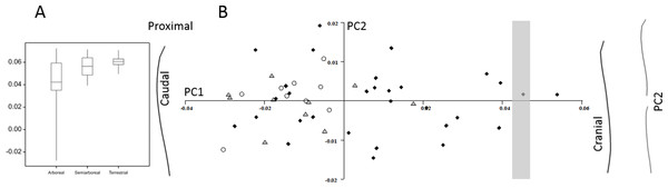 Primate humeral curvature (no apes).
