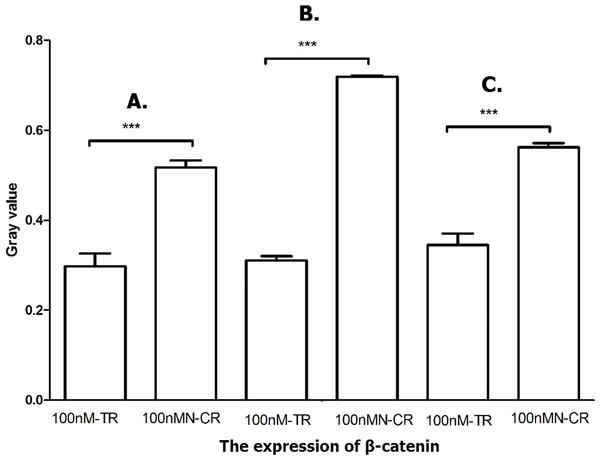 Overexpressed hsa-miR-138-2-3p inhibited Wnt/β-catenin pathway.