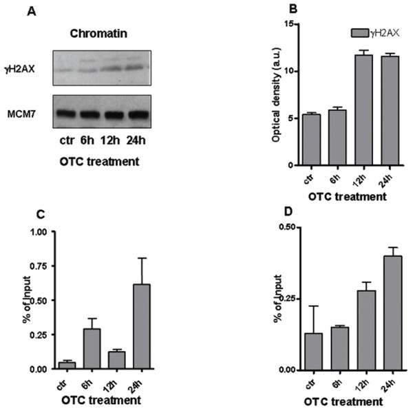 OTC and the chromatin changes.