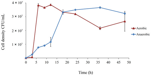 Growth course of E. coli REL4536 under aerobic and anaerobic conditions in DM25 media at 37°C.