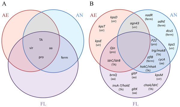 Venn diagrams of the distributions of (A) categories (TA, TA systems; vir, virulence genes; aa, amino acid transporters; pro, prophage excision; ferm, fermentation network) and (B) adaptive mutations, with corresponding categories affected in parenthesis, as reported among the AE, AN and FL genomes after 2,000 generations.