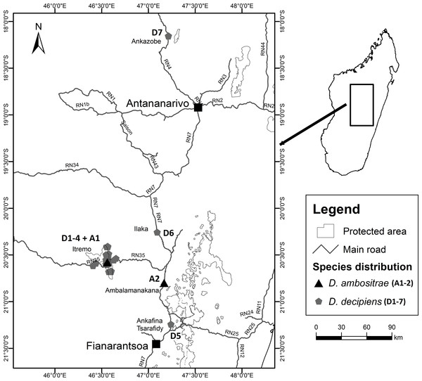 Locations of collection sites for Dypsis ambositrae and D. decipiens.