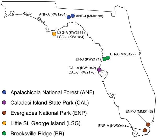 Collection localities of ten Crotalus adamanteus individuals used for venom-gland transcriptomics.
