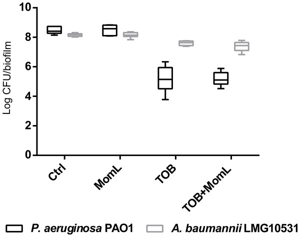 Effect of MomL on biofilms of P. aeruginosa PAO1 and A. baumannii LMG 10531 formed in wound model.