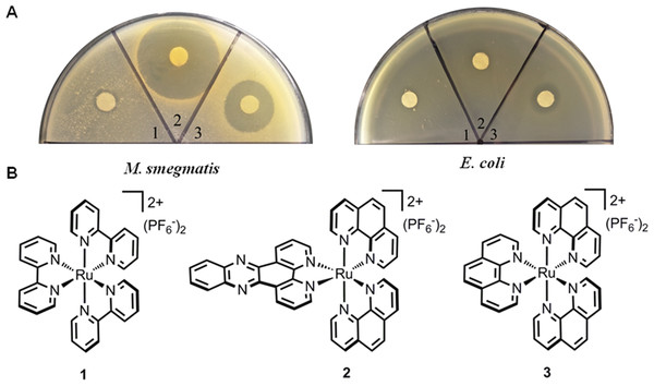 Antimicrobial activities of ruthenium complexes.