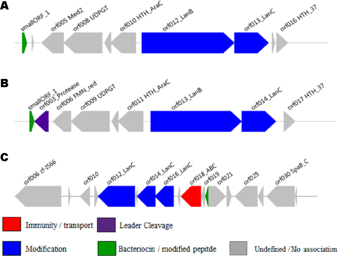 A Profile Hidden Markov Model to investigate the distribution and