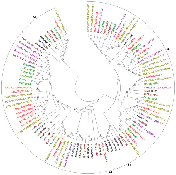 Phylogenetic tree of MEKK-like genes from tomato, potato, eggplant, pepper, and coffee in reference to Arabidopsis clustered according to their phylogeny.