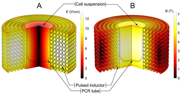 Finite-element method (FEM) model of the pulsed magnetic field inductor.