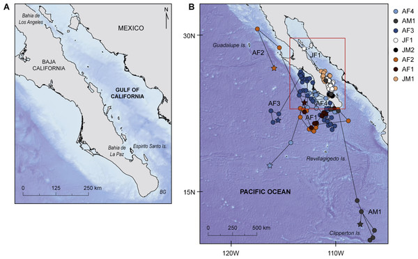 Study area and geolocated tracks of whale sharks.