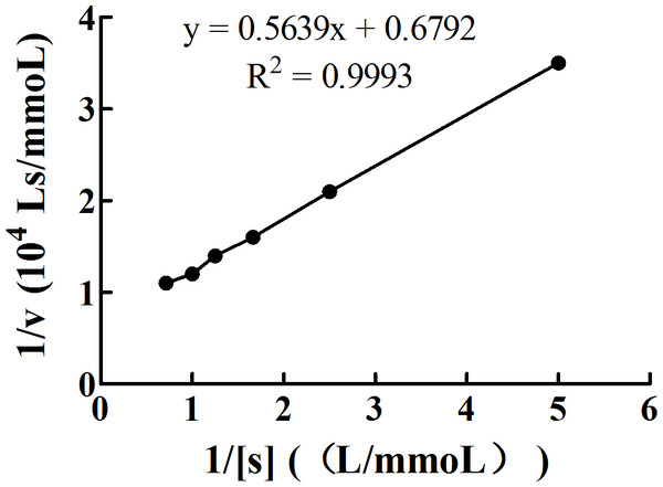 Double reciprocal plot of 1/[S] (L/mmol) and 1/v (104 Ls/mmol).