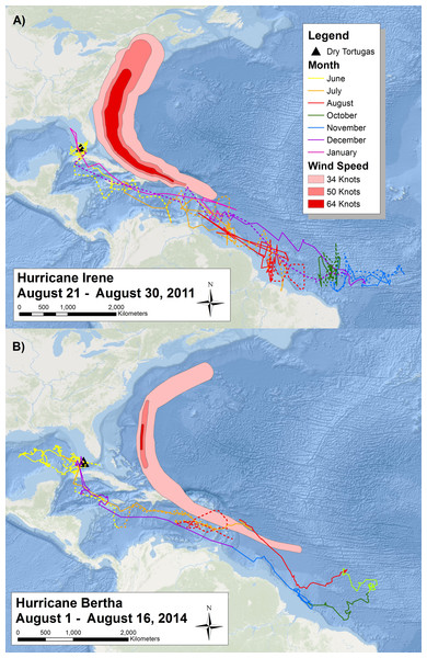 Migratory route of tagged sooty terns in 2011 and 2014.