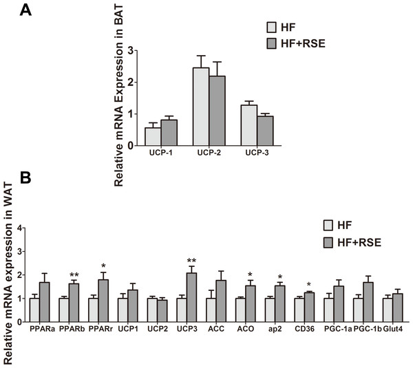 RSE induced the expression of UCPs, PPARs and their target genes.