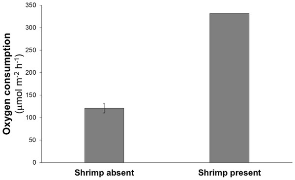 Mean oxygen consumption in four cores without shrimp and one with a single live Eucalastacus cf. torbeni shrimp specimen.