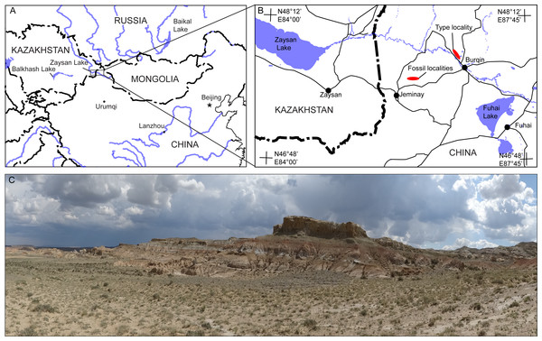 Jeminay and Burqin Propalaeocastor irtyshensis fossil localities in the Irtysh River drainage area in northwestern Xinjiang, China (modified from Stidham & Ni, 2014).