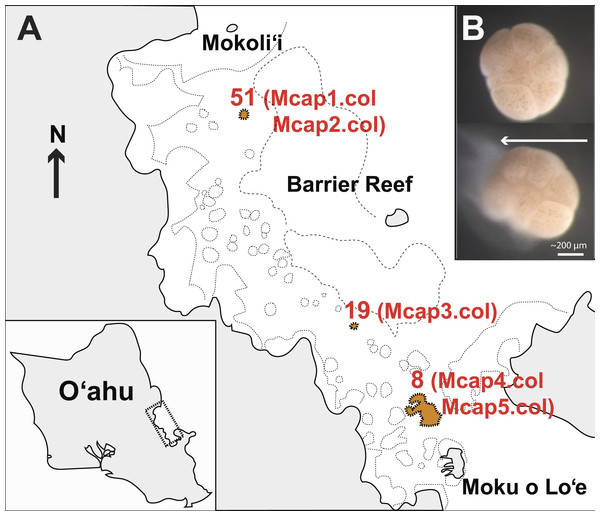 Sampling plan for Montipora capitata in Hawai'i.