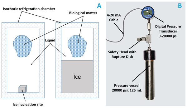 (A) Schematic of an isochoric system; ice nucleation site is the place where we placed a small metal whose role is to initiate ice formation.