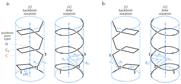Internal coordinate (i) and helical coordinate (ii) representations of right-handed (A) and left-handed (B) regular backbones.