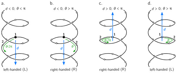 The handedness of a helix is a function of angular displacement θ perpendicular to the helical axis (green curved arrows) and linear displacement d along the helical axis (blue, vertical arrows).