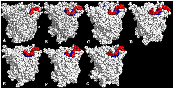 Conformations of exposed (red) and buried (blue) hydrophobic residues constituting the lid regions of T1 lipase of the last snapshots of 40 ns simulations as compared to (A) crystal structure, (B) H2O, (C) MtOH-H2O, (D) EtOH-H2O, (E) PrOH-H2O, (F) BtOH-H2O, (G) PtOH-H2O.